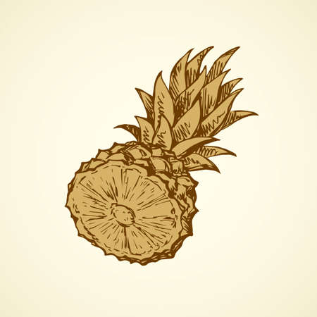 Yummy sappy pinapple comosus fruitful isolated on white backdrop. Freehand outline black ink hand drawn picture