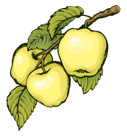 Ripening raw fresh pomum fruitful on tree twig isolated on white backdrop. Freehand vibrant hand drawn symbol sign sketchy in art scribble style pen on paper. Closeup view with space for text