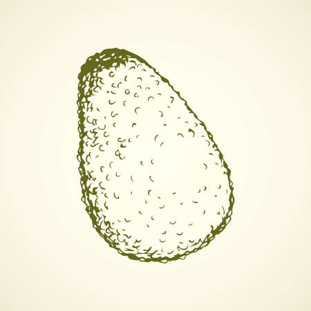 Tasty ripe fresh sappy avocado fruitful isolated on white backdrop. Freehand linear black ink hand drawn picture  sketchy in art retro scribble style pen on paper. View closeup with space for text