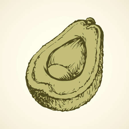 Tasty ripe fresh sappy avocado fruitful isolated on white backdrop. Freehand linear black ink hand drawn picture