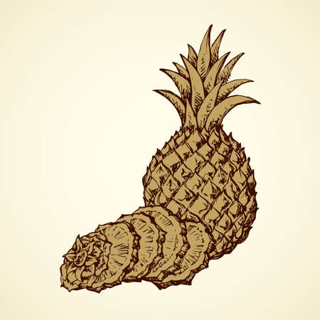 Yummy sappy pinapple comosus fruitful isolated on white backdrop. Freehand outline black ink hand drawn picture  sketchy in retro art scribble style pen on paper. Closeup view with space for text