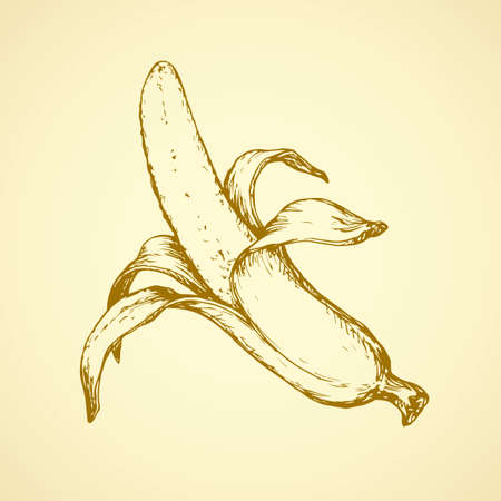 Ripe raw fresh big tasteful juicy banana fruitful isolated on white backdrop. Freehand outline ink hand drawn picture sketchy in retro art scribble style pen on paper. Closeup view with space for text