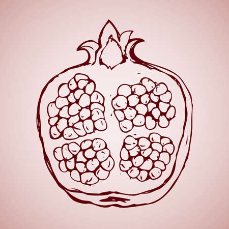 Slice of mature Punica granatum with small kernels isolated on pink backdrop. Freehand outline ink hand drawn picture sketchy in art scribble style pen on paper. View close-up with space for text