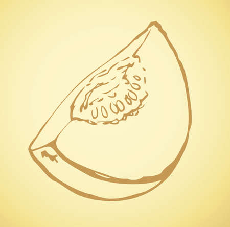 Tasty raw fresh sappy musk galia casaba fruitful isolated on white backdrop. Freehand linear outline ink hand drawn picture sketchy in art doodle style pen on paper. View closeup with space for text Vettoriali