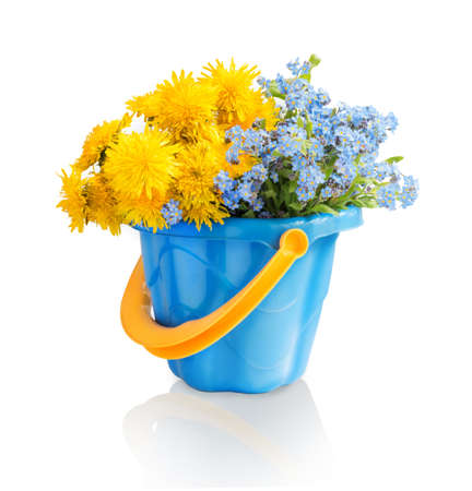 Simple cute lush corsage of vivid ocher fluffy blow balls and delicate cyan forget me in children toy plastic bucket isolated on white backdrop
