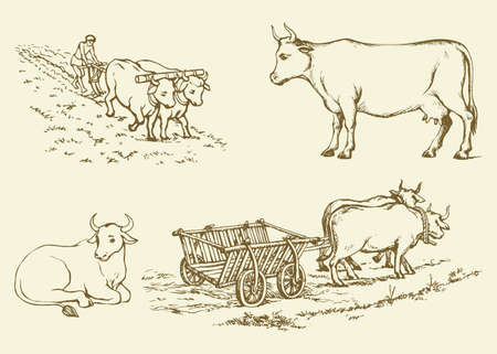 Cute young hoofed dairy buffalo standing in farmland graze pasture ground. Freehand outline ink hand drawn background sketchy in art scribble antique style pen on paper. Side view with space for text