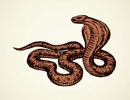 Big curve creepy viperidae crotalus asp serpentine on white backdrop. Outline black ink hand drawn zoo pictogram emblem sketchy in art retro doodle style pen on paper space for text. Closeup view