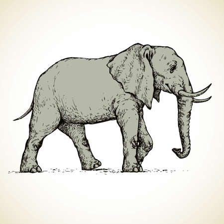 Old africana big powerful mammoth beast isolated on white background. Freehand outline ink hand drawn picture sketch in art doodle style pen on paper. Side view with space for text Ilustração