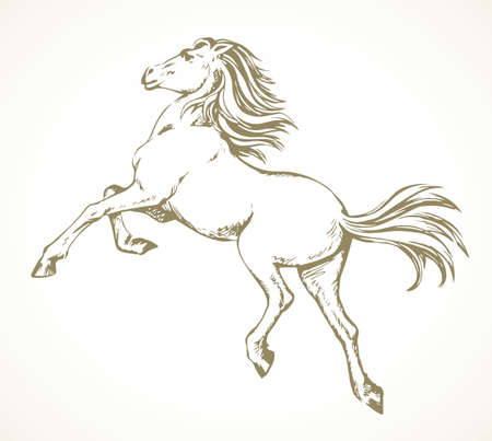 Gorgeous pride white courser smartly rear up on ranch race paddock. Freehand outline black ink pen hand drawn andalusian ride beast emblem pictogram design. Art doodle retro paper cartoon style Vektorgrafik