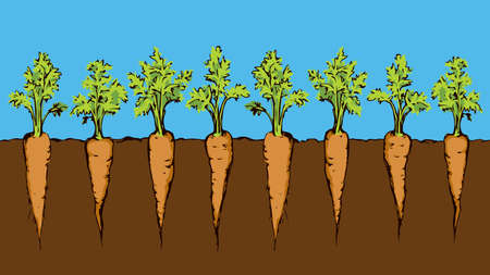 Ripe eco fresh juicy raw red haulm taproot isolated on blue sky backdrop. Bright orange hand drawn botany farmer patch border sketch in retro art doodle cartoon style. Closeup view with space for text Vektorgrafik