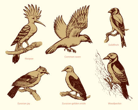 Set of large birds: fly rook, epops, golden oriole, woodpecker, jay, gold finch. Monochrome collection freehand ink drawn background sketch in art scribble style pen on paper with space for text