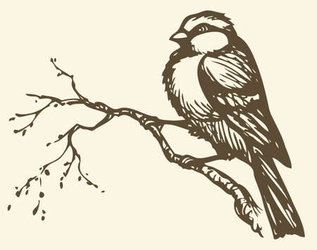 "Vector drawing of series of monochrome sketches ""Birds"". Tits, chickadees, and titmice constitute Paridae, a large family of small passerine birds which occur in the northern hemisphere"