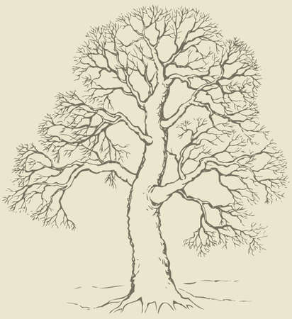 Vector monochrome hand-drawn linear image of mighty tree with bare branches Ilustração