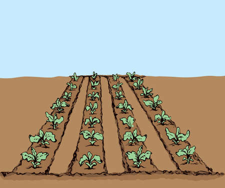 Eco green early lush raw soy bush flora culture sow on tillage furrow mulch patch on blue sky background. Bright color hand drawn yield scene sketch in retro doodle cartoon style with space for text Vektorgrafik