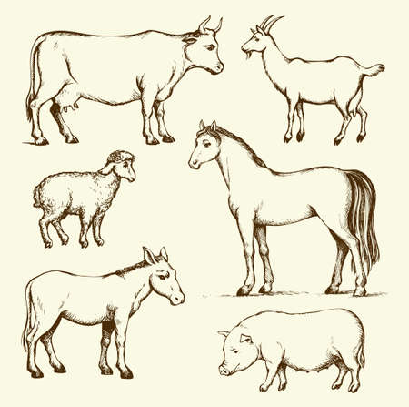 Old big rural animals stand on farmland pasture field isolated on white background. Freehand outline ink hand drawn picture sketch in art doodle retro style pen on paper. Side view with space for text