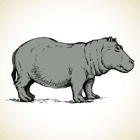 Hippopotamidae is herbivore mammal living in lake isolated on white background. Freehand outline ink hand drawn picture sketchy in art doodle style pen on paper. Side view with space for text Illustration