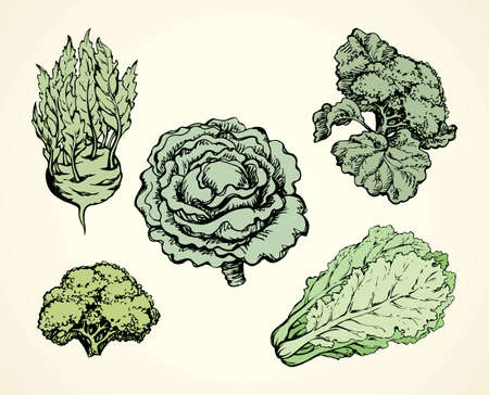 Ripe raw fresh Brassica oleracea collard brocolli head sign. Dieting dinner. Freehand line black ink hand drawn picture logo emblem sketchy in retro art doodle cartoon engraving style pen on paper