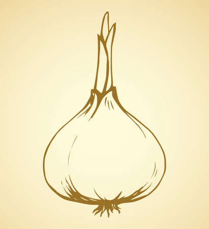 Ripen eco raw fresh common bulb leek fruitful icon isolated on white backdrop. Freehand outline ink hand drawn symbol sign sketchy in art scribble style pen on paper. Closeup view with space for text
