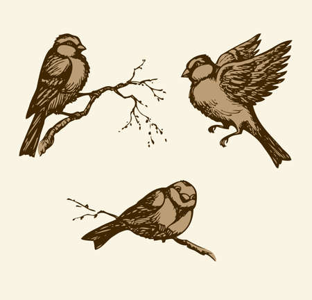 Tit isolated on white backdrop. Monochrome freehand outline ink hand drawn picture sketchy in retro doodle engraving style. Closeup side view with space for text Vektorové ilustrace