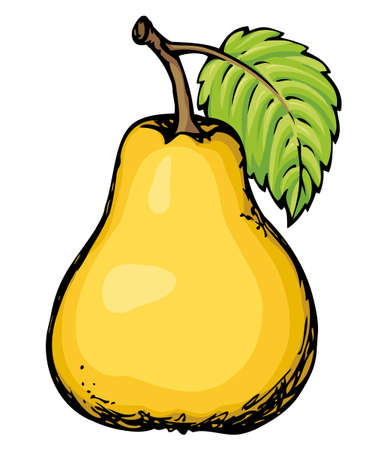 Ripening big tasteful raw fresh Pyrus fruitful isolated on white backdrop. Freehand outline vivid color hand drawn symbol sign sketchy in art scribble style. Closeup view with space for text