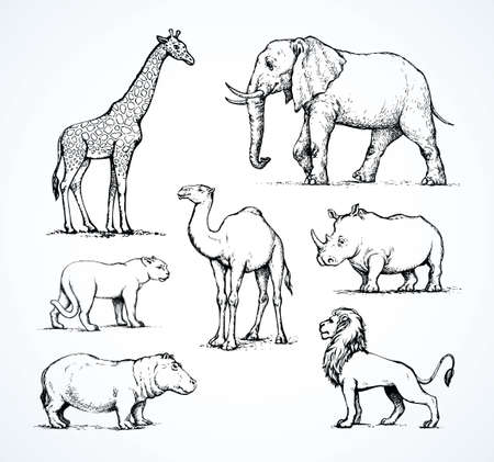 Old africana big powerful ungulate tropical jungle fauna beast isolated on white background. Freehand outline black ink hand drawn sign icon sketch in art doodle style pen on paper space for text