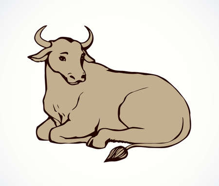 ector monochrome linear picture of lying cow with big horns. Zebu, sometimes known as humped cattle or Brahman, is a type of domestic cattle originating in South Asia, characterized by a fatty hump on their shoulders and drooping ears
