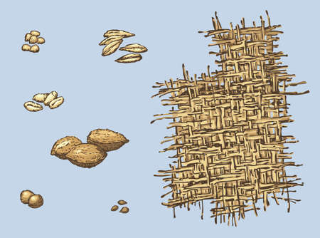 Series of vector illustrations of archaeological finds from the excavations of ancient human habitat. The remains of line; stone plums, cherries and apples; seeds of wheat, barley and millet
