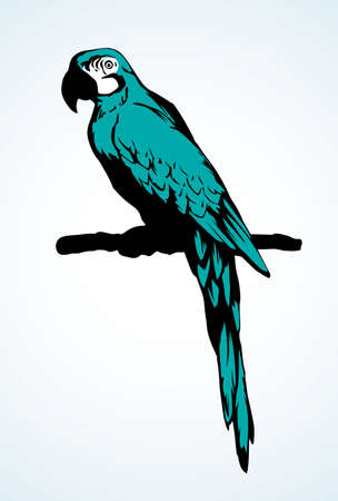 Big cute old fun vibrant blue pretty smart popinjay stand on light space for text. Bright green color hand drawn emblem sketchy in retro art scribble comic engrave style on paper. Closeup side view Vecteurs