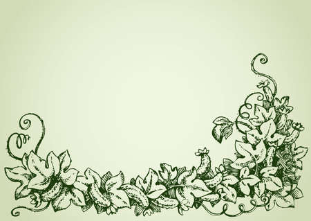 Cucumber is widely cultivated plant in gourd family Cucurbitaceae. Vine with fruits varying degrees of maturity, fading yellow flowers, lush foliage, curled tendrils. Vector monochrome freehand ink drawn background sketchy in scrawl ancient style pen on paper with space for text