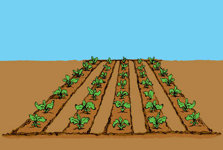 Eco green early lush raw soy bush flora culture sow on tillage furrow mulch patch on blue sky background. Bright color hand drawn yield scene sketch in retro doodle cartoon style with space for text