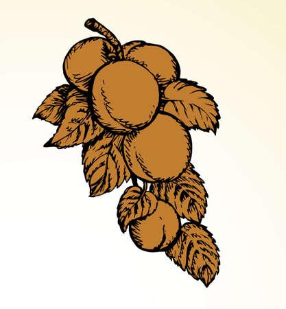 Red outline hand drawn big raw fresh prune twig stem flora grow logo emblem retro art doodle line style. Closeup view bio eco ripe sweet juicy tasty prunus health vegan jam diet autumn sky text space