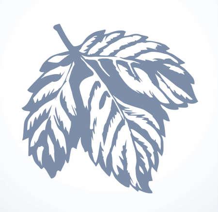 Outline black ink hand drawn emblem label design set retro art doodle engrave line print style. Close up macro view big fresh juicy grow wine vein leaflet sheet object. Light paper text space backdrop