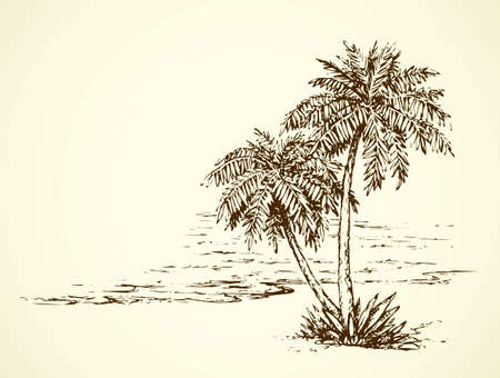 Summertime exotic scenic view with space for text on white sky backdrop. High lush coconut palmtree plant on bay. Freehand ink hand drawn picture sketchy in art retro scribble etch style pen on paper Vector Illustratie