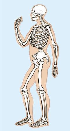 Antique health adult male figure vertebral fibula element stand white text space. Outline black drawn old face part organ object logo sign emblem sketch retro ancient art engrave print style side view 矢量图像