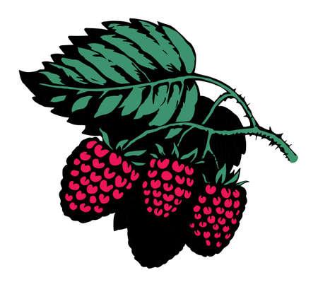 Bright hand drawn raw red razz twig floral farm emblem pictogram design retro art doodle outline print style. Close up view bio eco health dessert season farming flora light paper text space backdrop 矢量图像