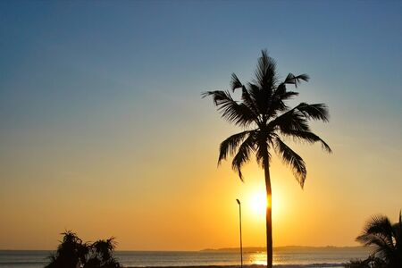 Coconut tree at sunset against the setting sun and the Indian Ocean. Sunset in sri lanka Banque d'images - 144171223