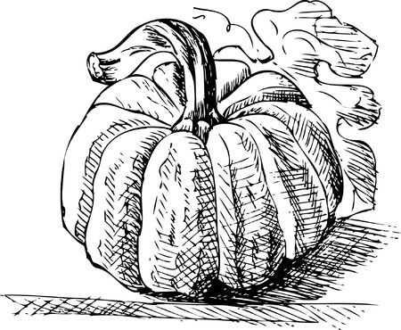 crackling: Pumpkin Illustration