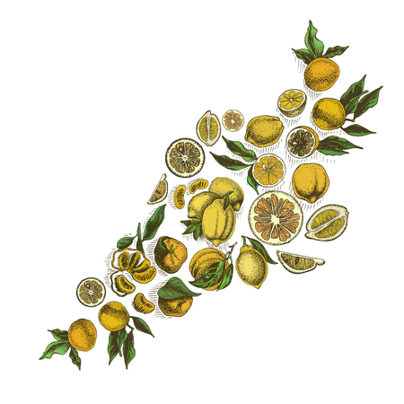 Vector sketch background fruit. Citrus card hand drawn. Illustration
