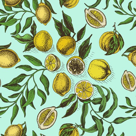 Vector sketch background fruit. Citrus card hand drawn. 矢量图像