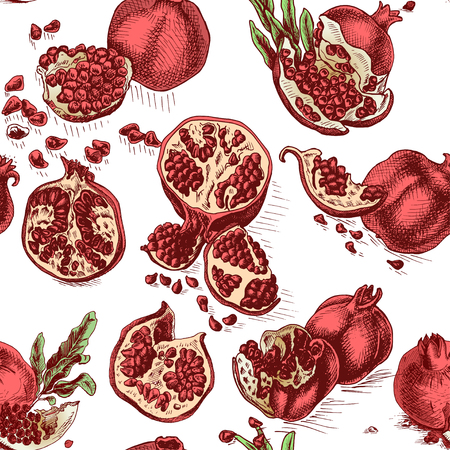 Hand drawing sketch illustratiion pomegranate.