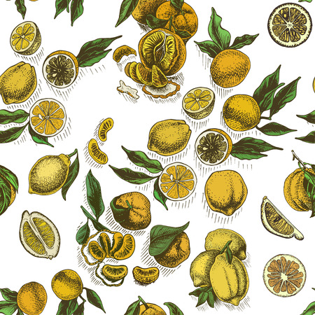 Vector sketch background fruit. Citrus card hand drawn. 向量圖像