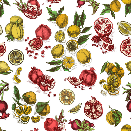 Hand drawing illustratiion pomegranate and citrus colorful.