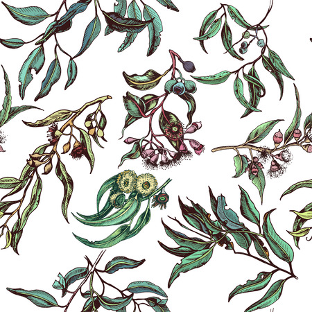 Hand drawn Pattern with eucalyptus, succulent flowers. Illustration