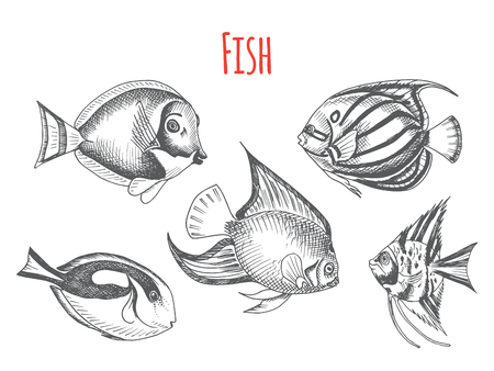 Vector hand drawn sketch Card with aquarium fish. Discus, Scalaria, Zanclidae, Paracanthurus hepatus. Ocean life.