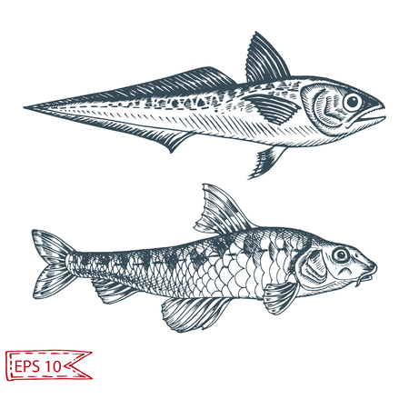 Hand drawn sketch illustration with fish. Wildanimal vector. Restaurant food card for seafood menu. Ocean life.
