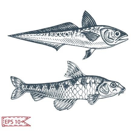 Handgezeichnete Skizzenillustration mit Fischen. Wildtiervektor. Restaurant-Food-Karte für Meeresfrüchte-Menü. Leben im Ozean. Vektorgrafik