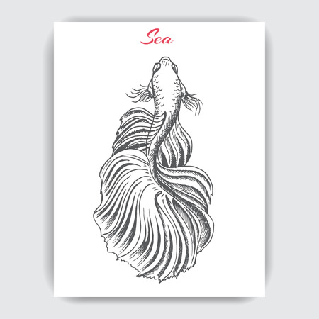 Hand drawn vector sketch Betta splendens, Fantail Goldfish. 向量圖像