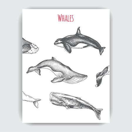Carte avec baleine. Animaux de la faune illustration vectorielle dessinés à la main. Vecteurs