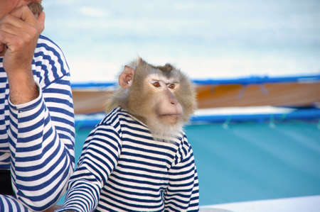 monkey in a sailor dress Little monkey in shirt