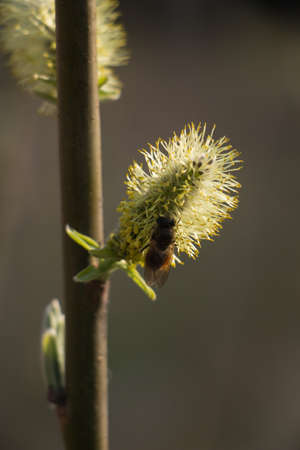 pollinate: Bees pollinate the buds on the trees